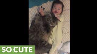 Baby cuddles sweet loving kitty