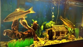 Mission to Catch a Pet Bass for My Aquarium