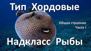 12.1 Рыбы часть I (7 класс) - биология, подготовка к ЕГЭ и ОГЭ 2018