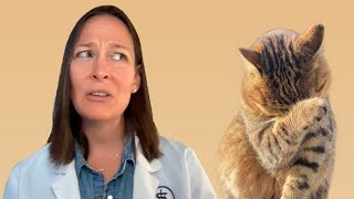 Top 10 Biggest Mistakes Cat Owners Make (A Vet's Perspective)