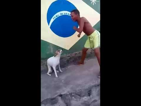 Прикол. Собака танцует с парнем.