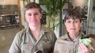 How Steve Irwin's Family Is Saving Injured Australian Animals
