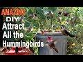 Endless Water Hummingbird Bird Bath-CHEAP DIY Attracts Birds Solar Powered Water Fountain in Garden