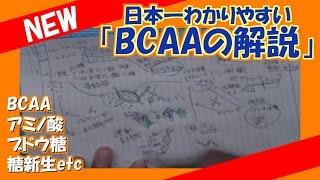 日本一わかりやすいBCAAの解説!【BCAA・アミノ酸・ブドウ糖・糖新生etc】