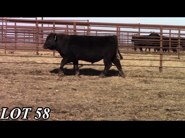 Mead Angus Farms Lot 58
