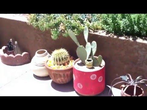My Las Vegas Backyard Organic Garden (spring 2016)