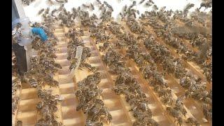 63. Напувалка для бджіл з підігрівом.Вдосконалення | Поилка для пчёл с подогревом усовершенствование