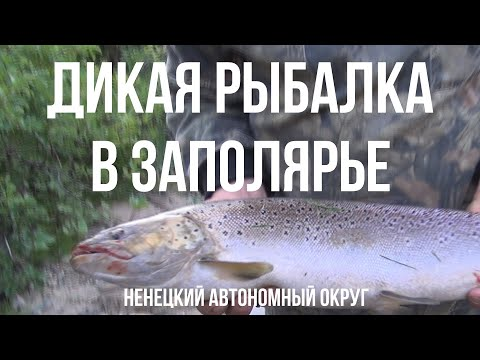 Дикая рыбалка на Севере в НАО (Ненецкий автономный округ)