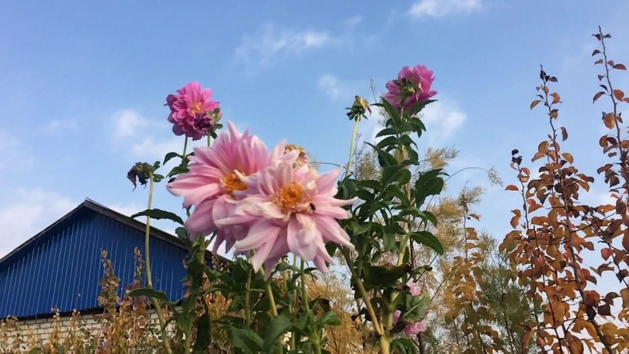 золотая осень в небольшой деревне... - YouTube