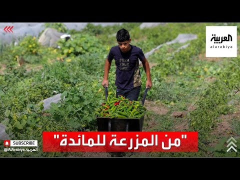 بدون وسيط.. مبادرة لدعم المزارعين في فلسطين