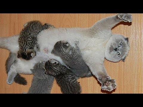 Mom Cats Love Their Kittens Compilation NEW