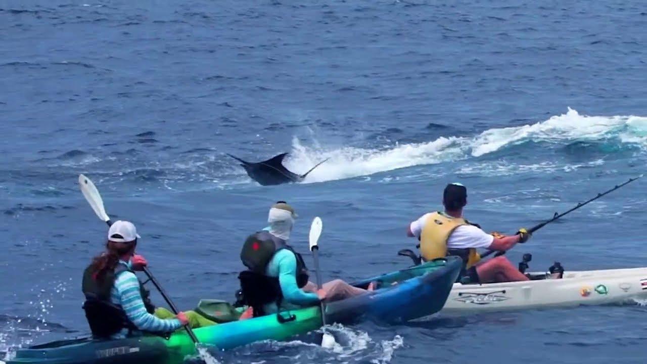 Kayak Blue Marlin Fishing
