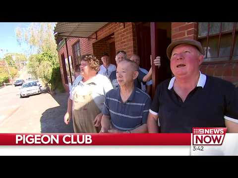 9 News Melbourne Australia:  A much-loved pigeon club might be about to have its wings clipped.