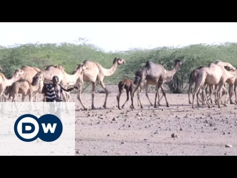 Saving an ancient nomadic way of life | Eco-at-Africa