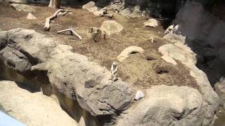 Tokyo is GENKI! - Free Zoo in Nishi Kasai