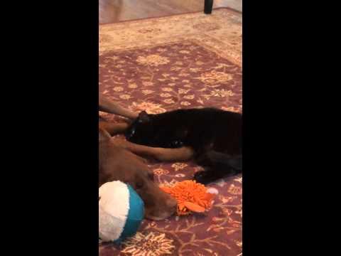 Black Cat LOVES Brown Dog