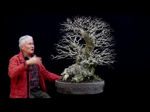 Sandevbonsai 2018 Bonsai Sessions With Walter Pall Part 6 Youtube