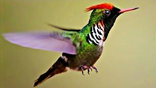 Бразилия завлекает туристов обилием экзотических птиц (новости)