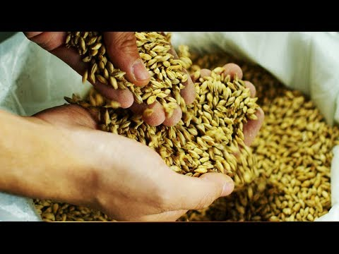 In This video 8 strange Side Effects Of Barley Water