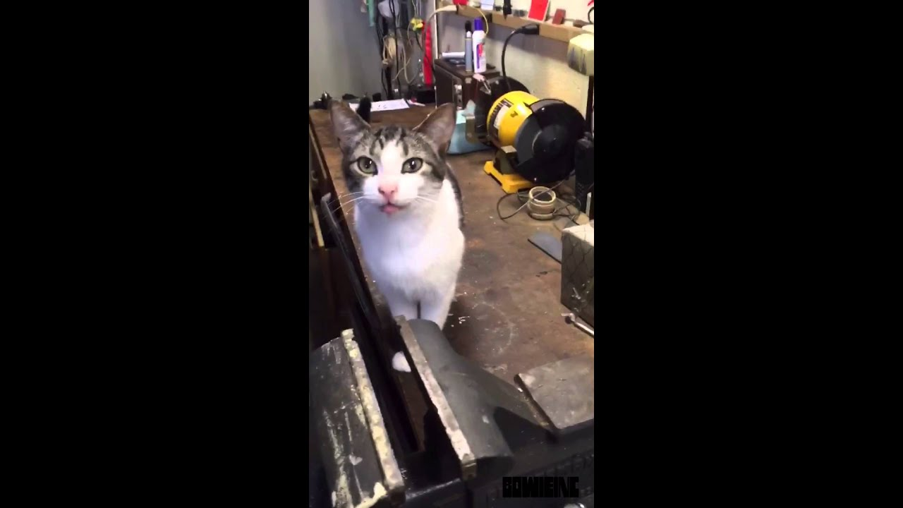 Rush Limbaugh Giving Cat Anxiety Not A Funny Cat Video