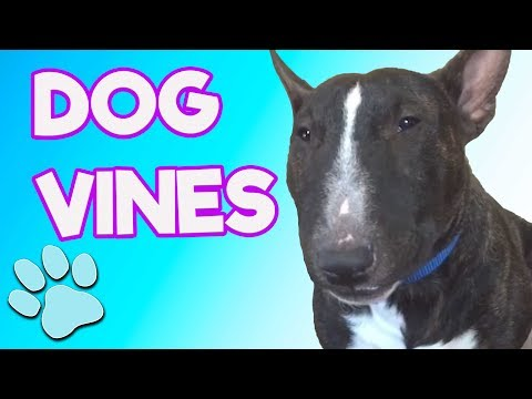 Best Dog Vines | R.I.P. Vine | #thatpetlife