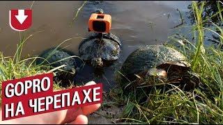 Все ради лайков блогер из Техаса прикрепил камеру к... черепахе. Динамичное видео из США