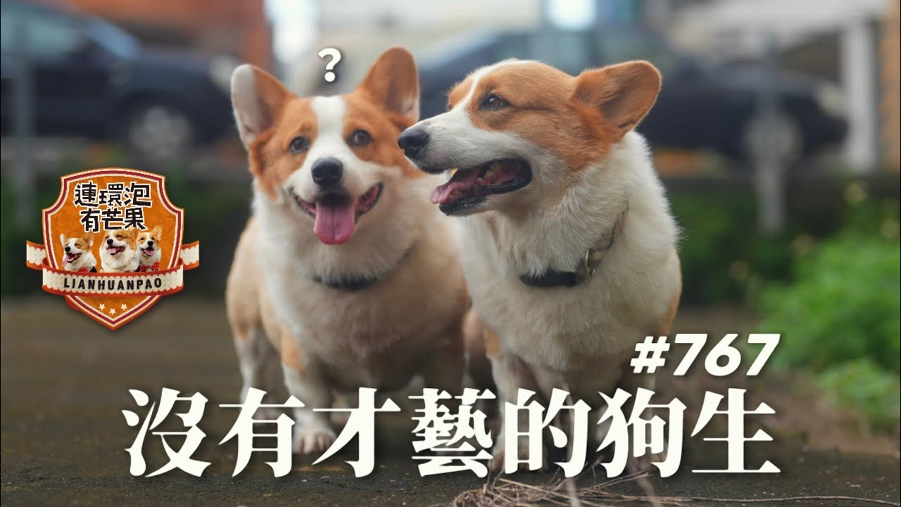 [散步直播]767_4K_沒有才藝的狗生