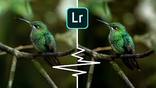 Editing your wildlife photos   Lightroom CC Tutorial screenshot 2