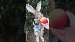 Кролик Питер.Дрессированные животные.