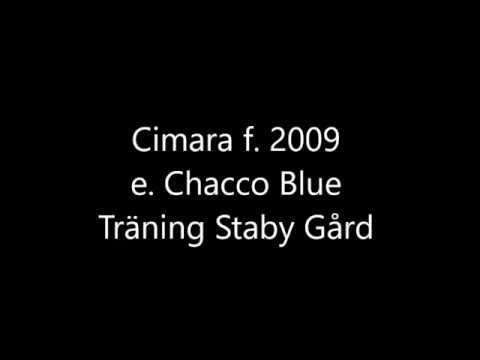 Download Cimara träning 171128