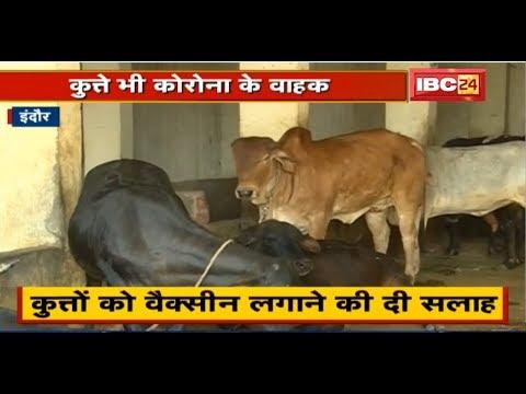 Indore में Corona Virus से Alert पर पशु चिकित्सालय | Dogs को Vaccine लगाने की सलाह