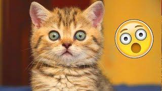 Я РЖАЛ ПОЛ ЧАСА |Смешные Коты и Собаки | ПРИКОЛЫ С ЖИВОТНЫМИ | Cute Cats