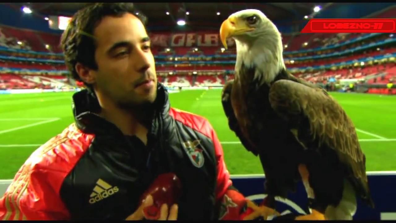 O Voo Da águia Simbolo Do E C Benfica De Portugal Youtube