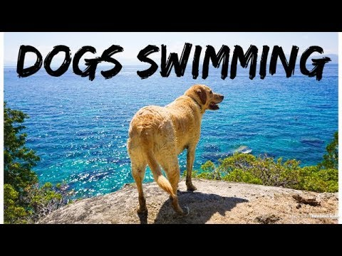 10 Tips for Taking Your Dog Swimming in a Lake or River