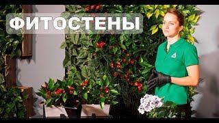 видео Фитомодуль для вертикального озеленения своими руками с автополивом