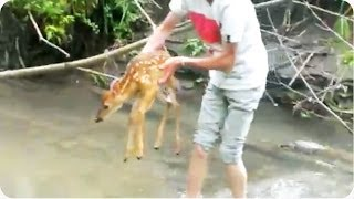 Kids Rescue Baby Deer From River