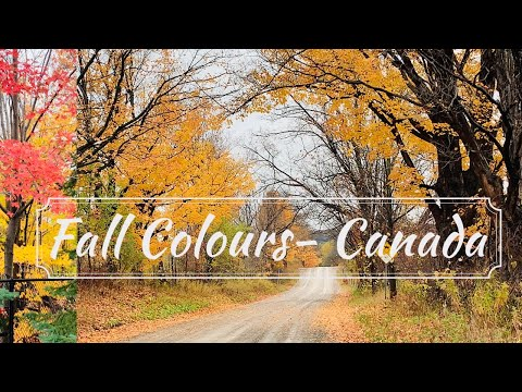 Fall Colours In Canada 🍁| Autumn Season | Drive Along Near Toronto, Ontario|Canada Tamil Vlog| கனடா