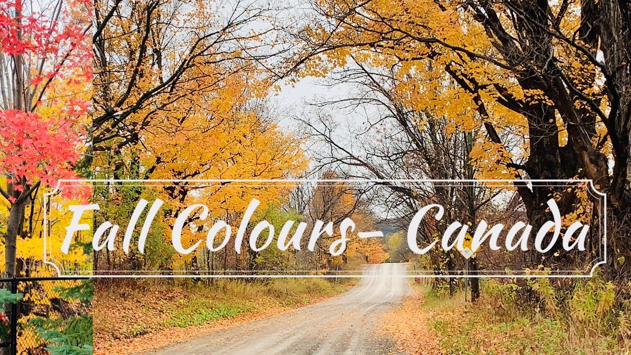 Fall Colours Canada | Autumn Season | Drive Along Near Toronto, Ontario | Canada Tamil Vlogs