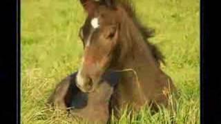 Les chevaux!