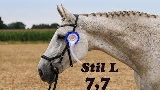 Stil L, Wechold, 23.07.2016, 7,7 - 3. Platz