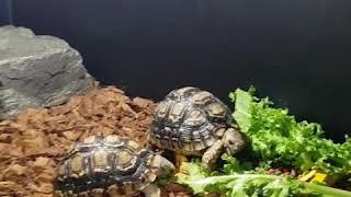거북이 옴뇸뇸 10초