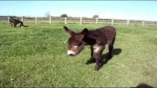 Zena survives thanks to dedicated staff - The Donkey Sanctuary