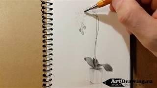 Скетч карандашом комнатного растения
