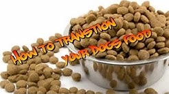 How to Change your dogs food