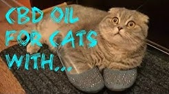 CBD Oil For Cats With Pancreatitis Review 2018