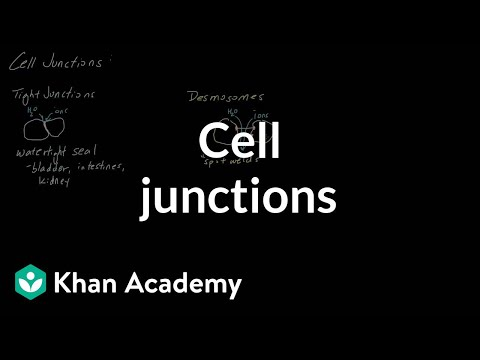 Cell Junctions | Cells | MCAT | Khan Academy