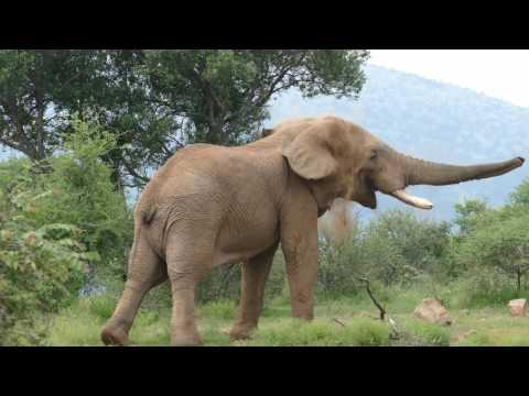 Pilanesberg National Park - Safari 3 - SOUTH AFRICA 02/2017