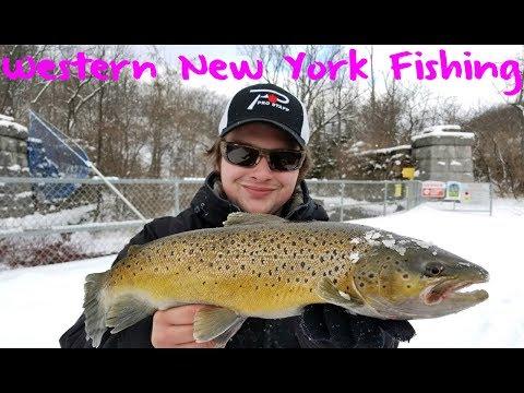 Western New York Steelhead & Brown Trout Fishing