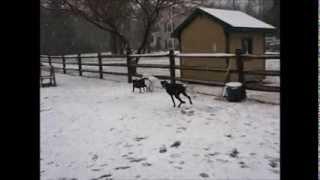 Snow Day At K9 Basics Dog Training