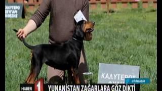 Yunanistan te Orta Asya'dan getirdiğimiz zağara da göz dikti